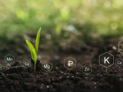 3 dicas de ouro na hora de adquirir fertilizantes