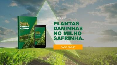 ebook-milho-safrinha